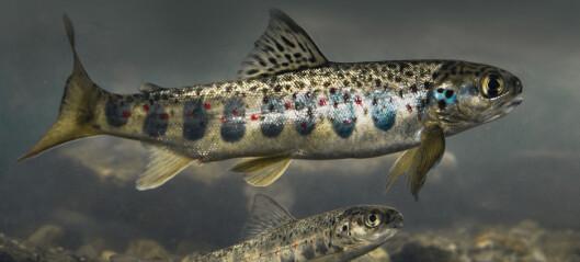 Småblank: Norges sjeldneste biologiske mangfold?