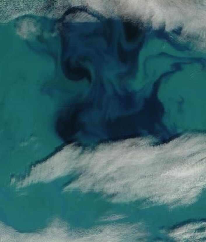 Blue Hawaii? Nei, Barentshavet like øst for Bjørnøya, sett fra NASA-satellitt 28. juli. (Foto: (NASA MODIS))