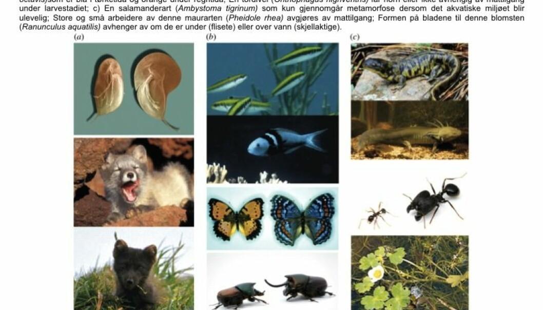 Biologi: Evolusjon av egenskaper som endrer seg etter miljøet