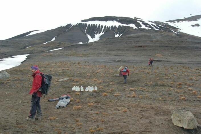 Hele fem utgravninger er i gang. (Foto: Erik Tunstad)