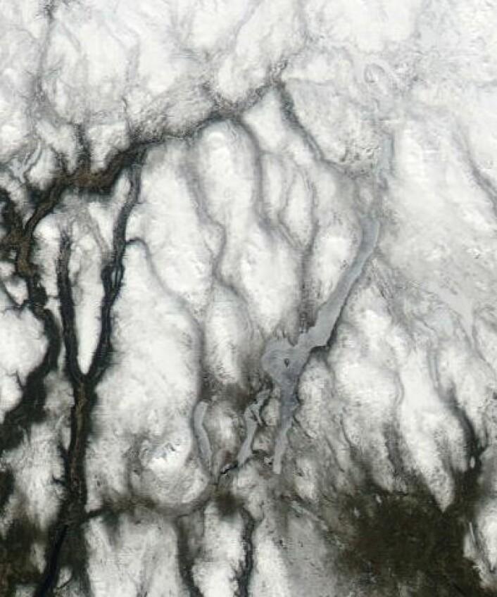 Det er et stykke igjen til sol og sommer i traktene mellom Drevsjø og Røros. Men 1. mai begynte i hvert fall isen på Femunden å vise noen svakhetstegn. Her sett fra NASAs satellitt Aqua. (Foto: (NASA MODIS))