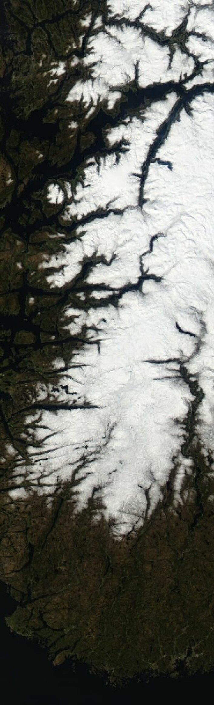 NASAs satellitt Terra hadde klarvær på hele strekningen fra Hardanger til Lindesnes da den passerte 2. mai. (Foto: (NASA MODIS))