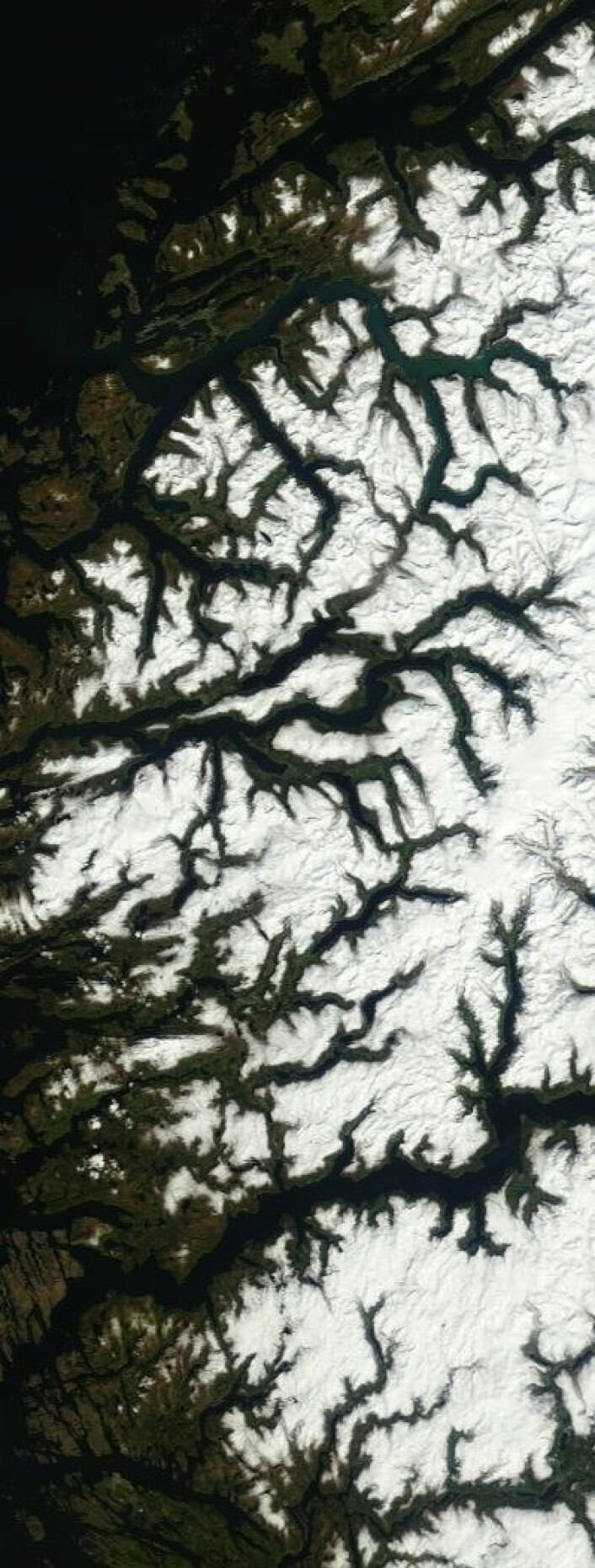 Fagert er landet. Her sett fra drøyt 700 km høyde tidligere i dag. (Foto: (NASA Terra MODIS))