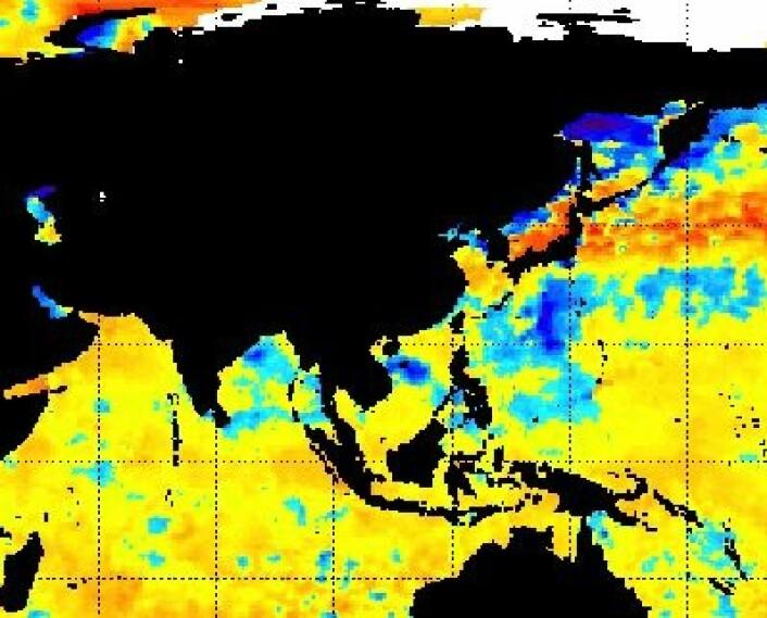 """Satellittmålt temperatur i havoverflaten. Man kan se kalde spor (blått) etter både """"Phailin"""" (India), """"Nari"""" (Vietnam) og """"Wipha"""" (Japan). (Foto: (NOAA, 17. okt 2013))"""