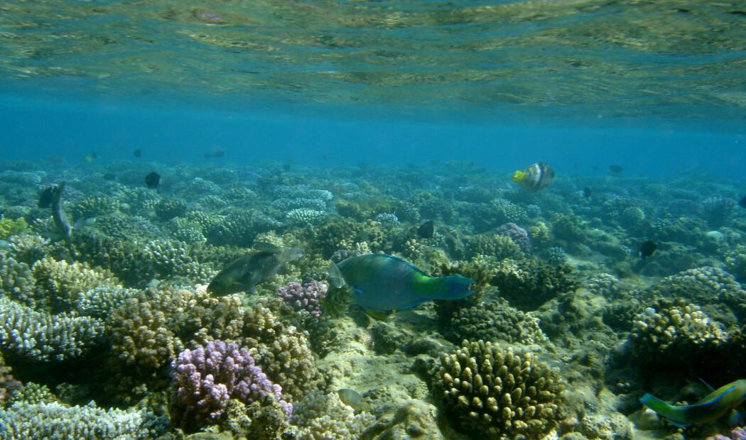 Håp for Darwins korallrev?