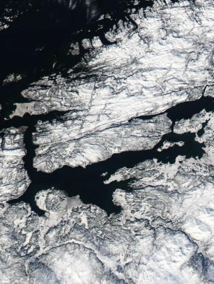 Vinteren holder fortsatt stand i Trøndelag. Her sett fra NASAs satellitt Aqua 8. mars. Ikke mye grønt å se der, nei. (Foto: (NASA Aqua MODIS))