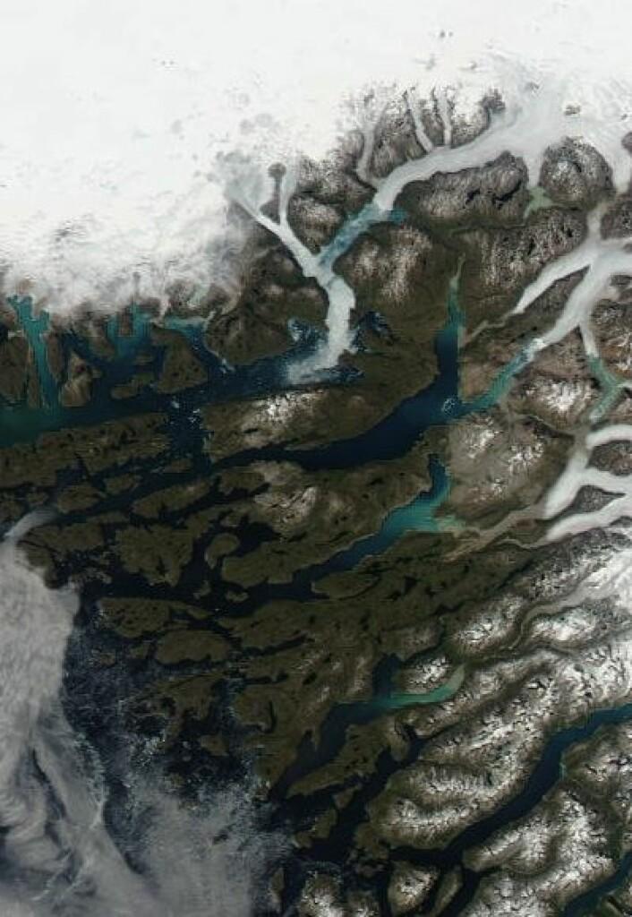 Brattahlid og omegn, sett fra satellitt 26 juni. (Foto: (NASA Aqua MODIS))