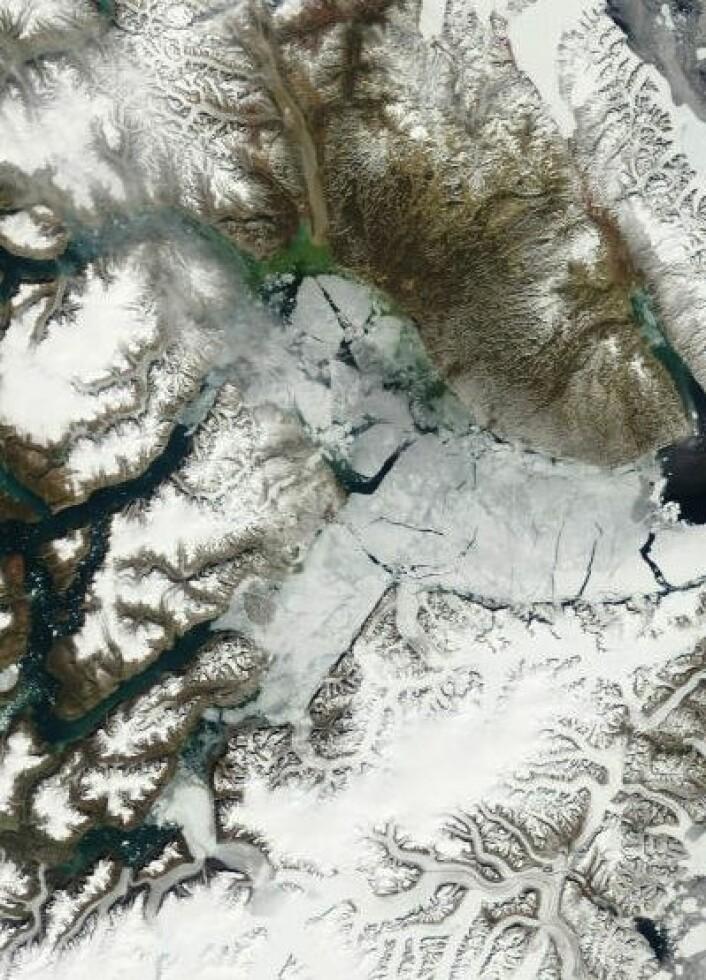 Det er sommer på Grønland nå, men 5. juli hadde isen fortsatt ikke helt forsvunnet i verdens lengste fjord ved Scoresby Sund. (Foto: (NASA Terra MODIS))