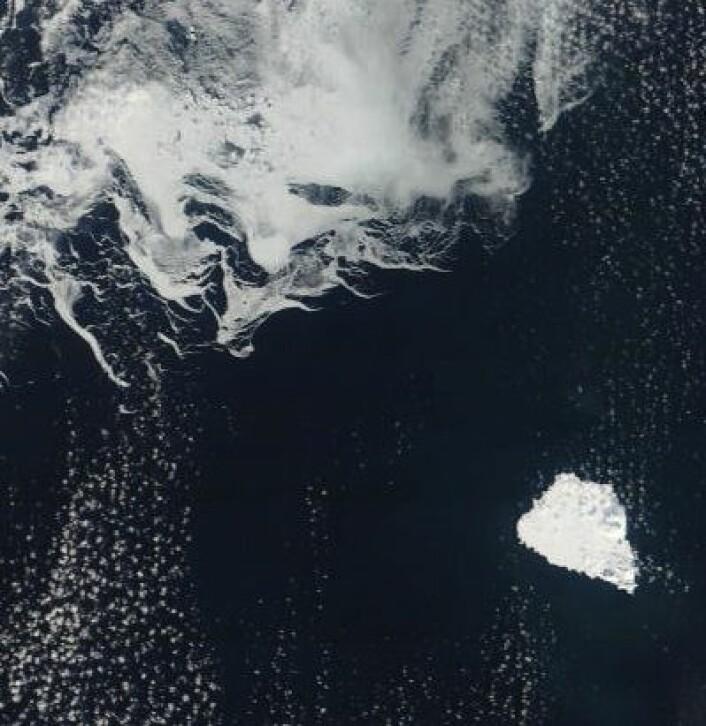 Skyfritt ved Bjørnøya 31. mars. Og drivisen er et godt stykke unna. (Nord er opp til venstre). (Foto: (NASA Terra MODIS))