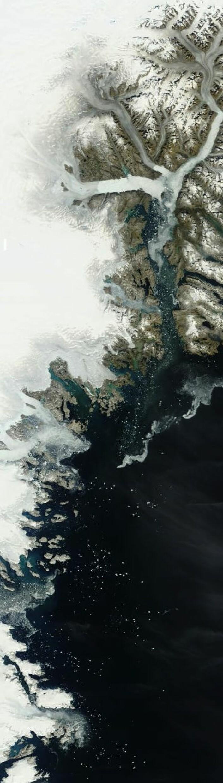 Sommer og sol, men ikke mye grønt å se på sør-øst-kysten av Grønland. Men mange isfjell i sjøen. (Foto: (NASA Terra MODIS))