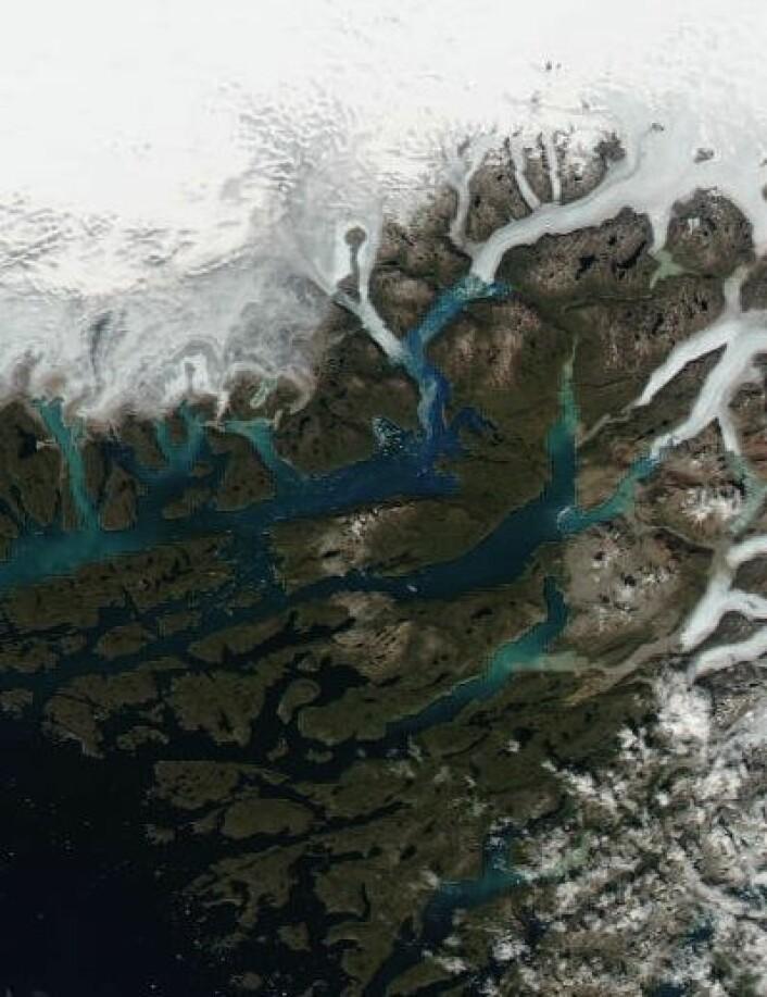 Her bosatte de gamle vikingene seg for drøyt 1000 år siden. Eirik Raudes gård Brattahlid lå visstnok like til høyre for midtpunktet i dette bildet, som ble tatt 19. juli. (Foto: (NASA Terra MODIS))