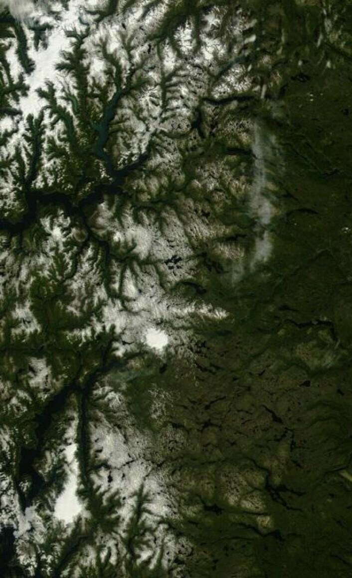 Jostedalsbreen, Folgefonna og Hardangerjøkulen? Joda, de er der enda. Ikke så rart, slik denne sommeren har vært i Sør-Norge. (Foto: (NASA Terra MODIS))