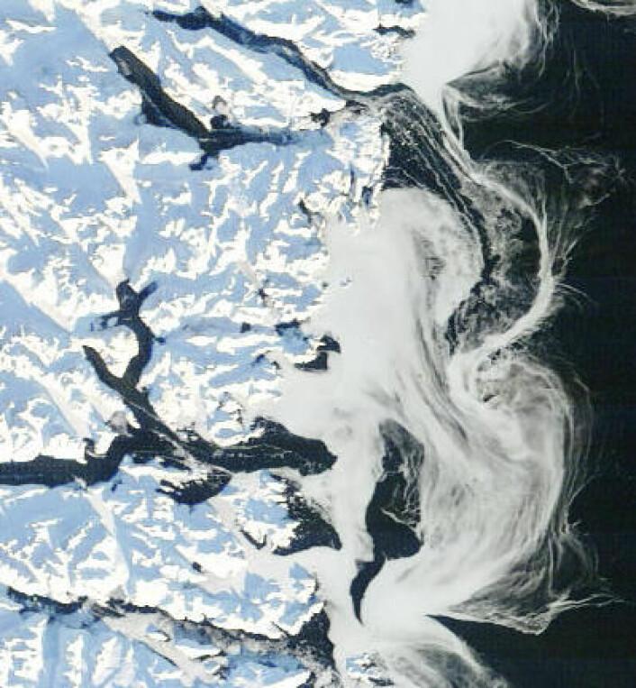 Fjorder, fjell og drivis sør-øst på Grønland, sett fra NASAs satellitt Terra 17. januar. (Foto: (NASA Terra MODIS))