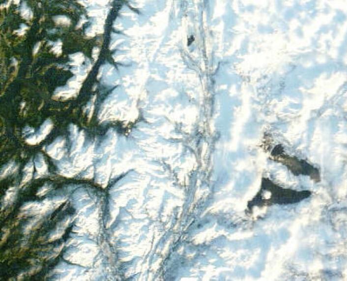 Limingen og Tunnsjøen sett fra satellitt 19. januar 2014. (Foto: (NASA Terra MODIS))