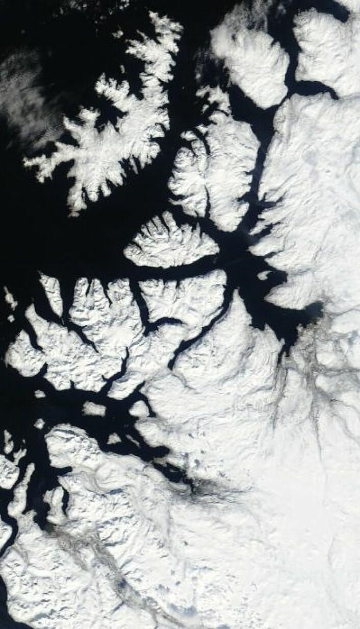 Til tross for april-temperatur en grad over normalen: Det var ikke mye grønt å se da NASAs satellitt Terra passerte over Alta i Finnmark 3. mai. (Foto: (NASA Terra MODIS))