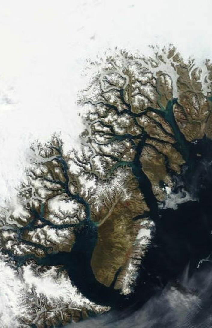 Det er varmest på østkysten av Grønland nå. Her er et isfritt Scoresby Sund og områdene som Norge og Danmark kranglet om, sett fra satellitt 19. august. Punktstørrelse 1 km. (Foto: (NASA Aqua MODIS))