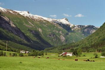 Kuer, gras og bøker: Fjærland i et nøtteskall