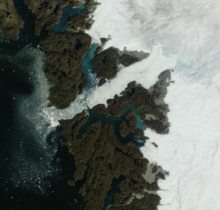 Jakobshavnbreen krymper raskt. Her sett fra satellitt 29. august 2012. (Foto: (NASA MODIS))
