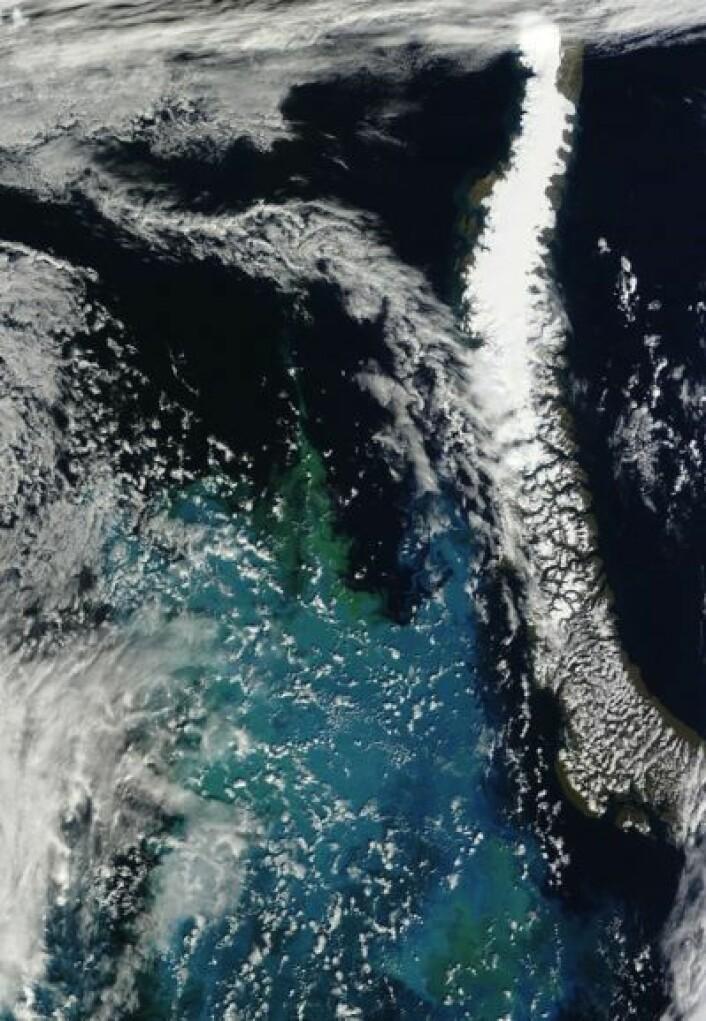 Østre Barentshav sett i redusert oppløsning fra satellitten Terra 23. august. (Foto: (NASA Terra MODIS))