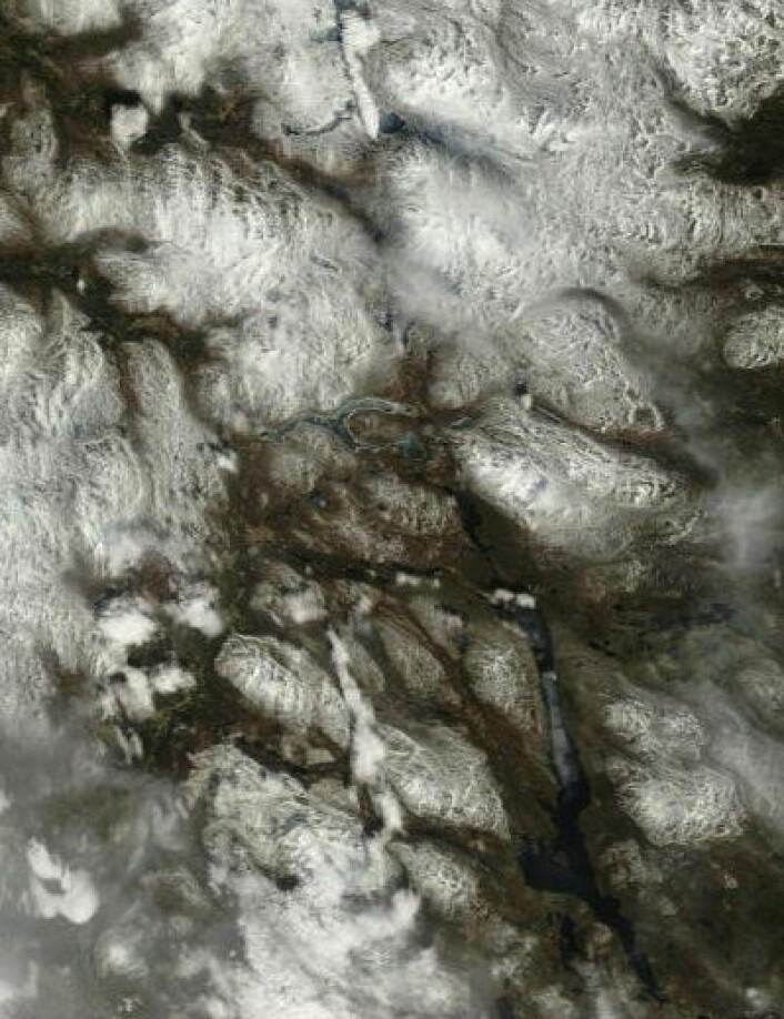 17. mai i traktene rundt Femunden og Aursunden, sett fra NASAs satellitt Terra. (Foto: (NASA Terra MODIS))