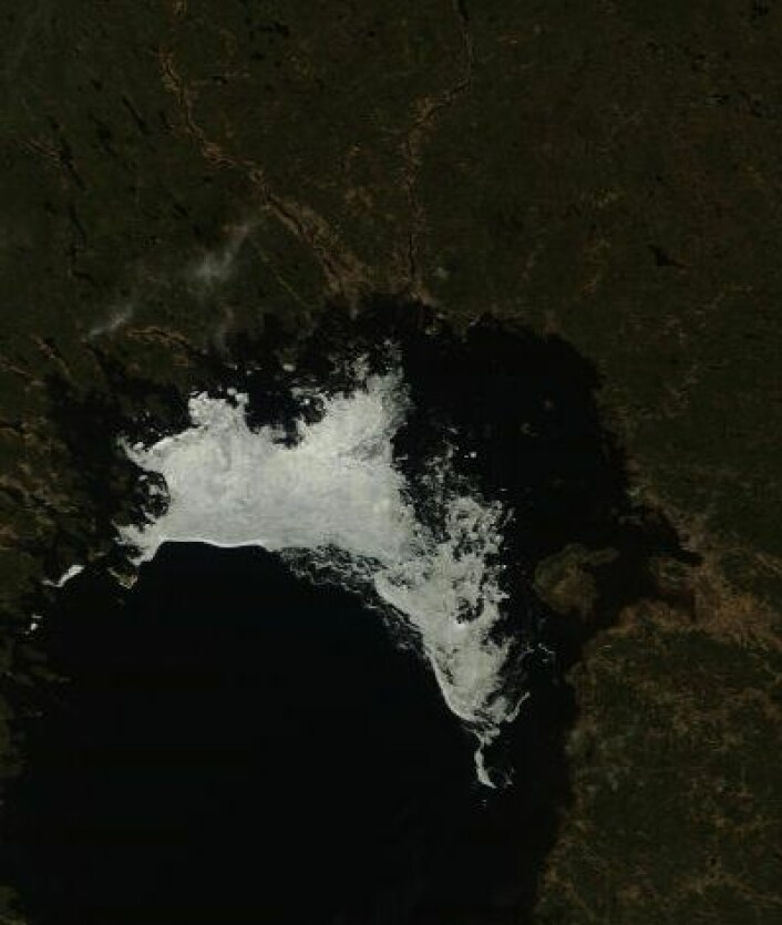 Årets siste bilde av isen i Bottenviken, tatt 16. mai (redusert detaljoppløsning). (Foto: (NASA Terra MODIS))