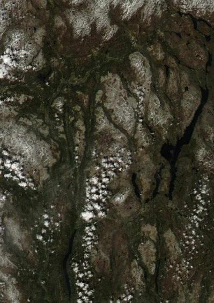 Ikke mye snø igjen i området mellom Femunden og Rondane da NASAs satelliitt Aqua passerte lørdag 25. mai. (Foto: (NASA Aqua MODIS))