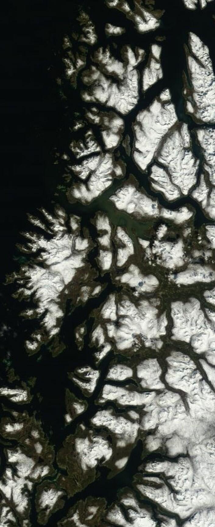 Til og med NASAs satellitter ser at det nå begynner å grønnes i Troms. Bildet er tatt 24. mai. (Foto: (NASA Terra MODIS))