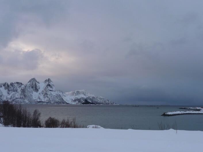 Utsikt frå Myre i Vesterålen: Skogsøya og storhavet. (Foto: Björn Lundquist)