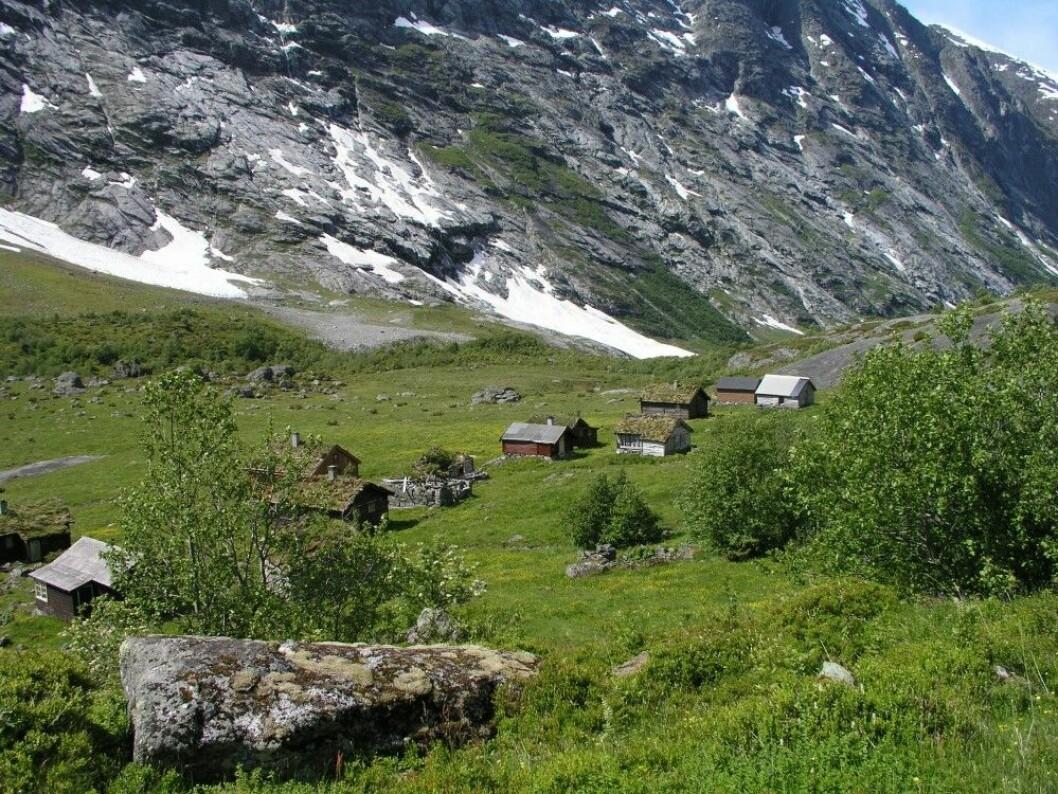 Storesætra i Stryn (Sogn og Fjordane) slik den ser ut i dag. Dette landskapet har folk brukt helt siden steinalderen. Pollenprøvene ble tatt opp av bakken omtrent midt på sætra. (Foto: Kari Hjelle)