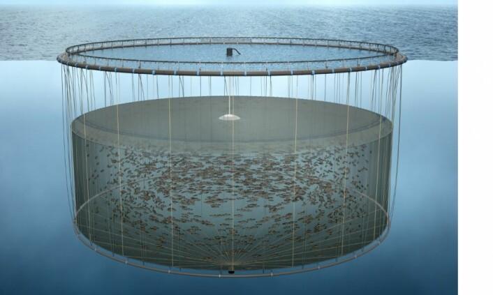 Skisse av hvordan en nedsenket merd med luftkuppel kan se ut. (Illustrasjon: Nagell3D / Havforskningsinstituttet)