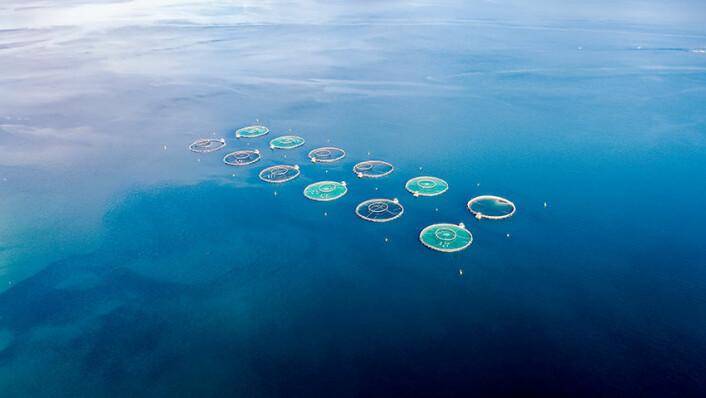 Under de blå bølgene finner vi alger som danner næringsgrunnlag for alt annet liv i havet. Men noen alger kan drepe fisk, både de som svømmer fritt og oppdrettsfisk. (Foto: Andrey Armyagov/Colourbox)