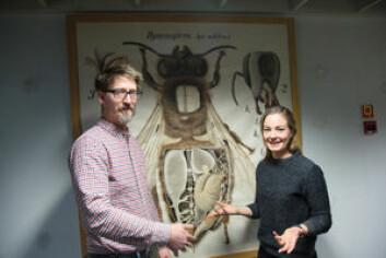 Stipendiat Julie Sørli Paus-Knudsen, som har Anders Nielsen som veileder, undersøker hvordan nervegiften i en bestemt type plantevernmiddel skader bier og humler og påvirker bestøvningen av blomster. (Foto: Yngve Vogt)