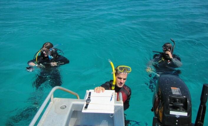 Minst to dykkere filmet hvert utslipp av fisk over Det store barriererevet (Great Barrier Reef) på østkysten av Australia. Her er forskerne Fredrik Jutfelt fra NTNU (f.v.), forsker og leder for undersøkelsen Graham Raby og seniorforsker Timothy Clark i vannet. (Foto: Josefin Sundin)