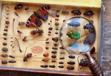 Hvis den globale temperaturstigningen når to grader, vil det gå hardest ut over insektene. Opp mot 18 prosent av insekter vil miste over halvparten av utbredelsen. (Foto: ju_see / Shutterstock / NTB scanpix)