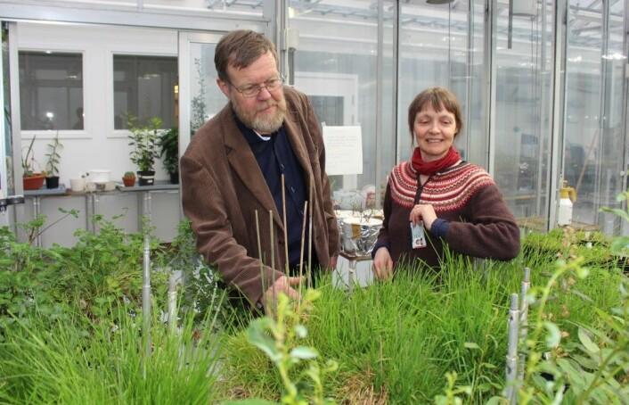 Christian Brochmann og Anne Krag Brysting i fytotronen på Blindern: Her skal de dyrke planter fra afrikanske himmeløyer, for å lære mer om hvordan nye arter dannes. (Foto: Bjarne Røsjø / UiO)