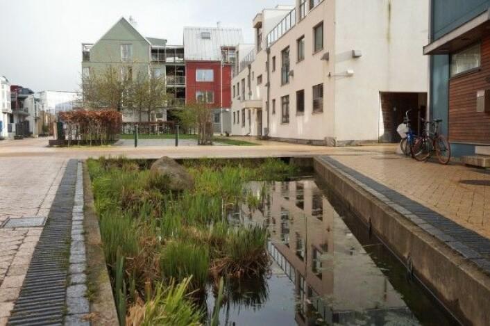 Regnet som traff København, rammet deretter også Sør-Sverige. Byen Malmö har siden den gang satt inn flere tiltak for overvannshåndteirng, her med en dam på Vesterhamn. (Foto: Helena Nordh)