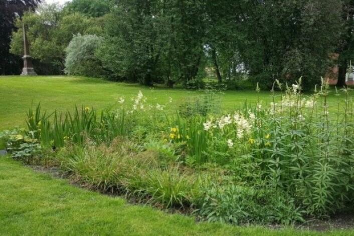 Et regnbed er en beplantet nedsenkning i terrenget hvor vegetasjonen bruker regnvannet til å spire og gro, og overskuddsvannet blir liggende en stund før det filtreres ned i bakken. (Foto: Ruth Lothe /NMBU)