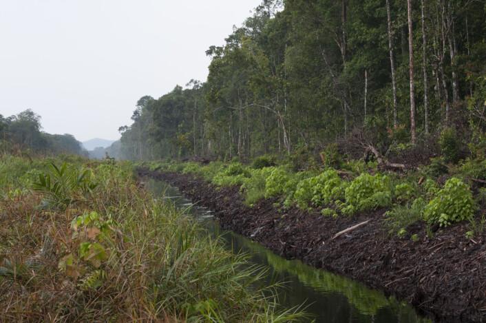 Når sumpskogene blir drenert for å utvinne kull, forsvinner en viktig naturtype som er lite utforsket. (Foto: Lukas Rüber, Naturhistorisches Museum Bern)