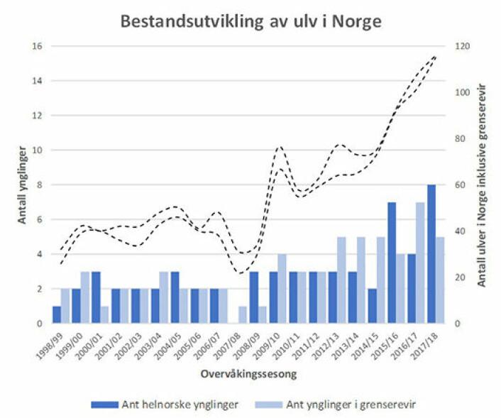 Her er en figur som neppe er lagd tidligere. Den viser viser anslått antall ulv i Norge (stiplede linjer viser mulig variasjon). Den viser også antall nye valpekull i norske revirer (mørkeblå søyler) og i norsk/svenske revirer (lyseblå søyler). Data og grafikk: Rovdata.