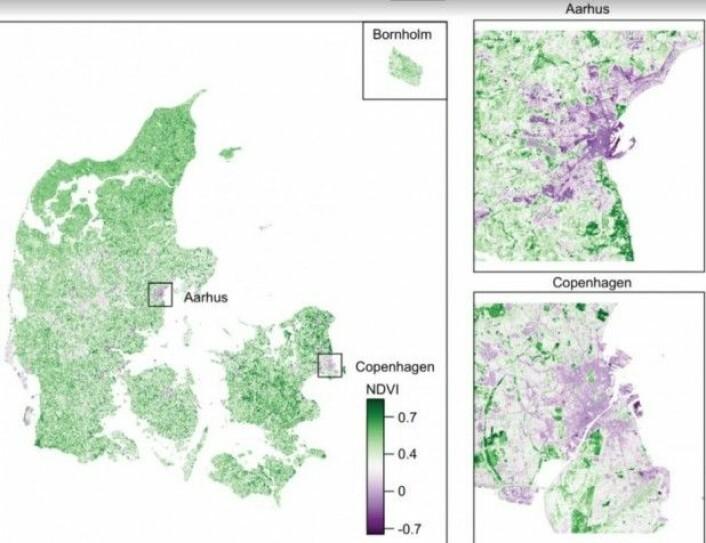 Danmarkskartet viser fordelingen av vegetasjon. Jo lavere NDVI-tall (Normalized Vegetation Difference Index), jo mindre tett vegetasjon er det i et område. Særlig i de største byene kan det være langt mellom den tette vegetasjonen. (Foto: fra artikkelen i Schizophrenia Research)