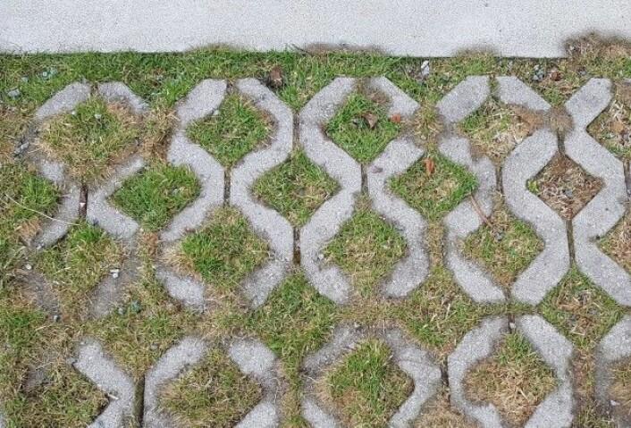 Gressarmeringsstein er blitt et populært alternativ til tette flater. Denne typen stein er utformet med et hulrom som kan fylles med grus eller jord og tilsåes med gress. (Foto: Ove Steinar Grande)