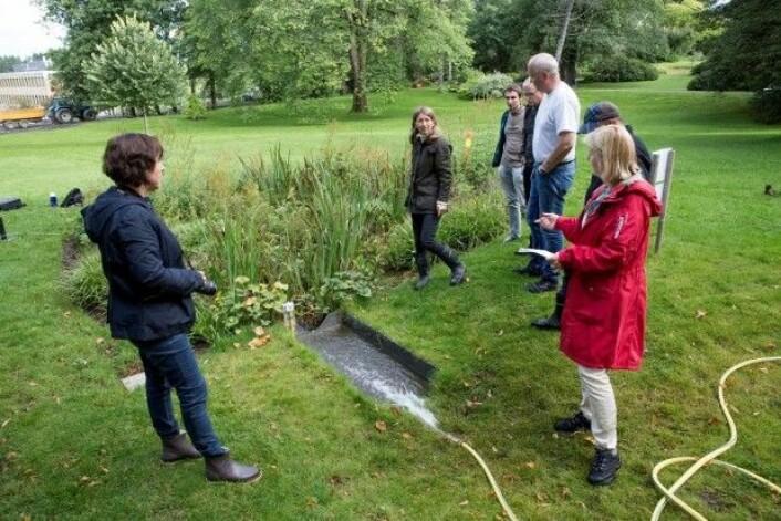 Parken på Campus Ås på NMBU brukes som et landskapslaboratorium hvor tiltak for å håndtere overvannsproblemer testes og utvikles. Regnbedet på bildet er en del av prosjektet. (Foto: Håkon Sparre / NMBU)