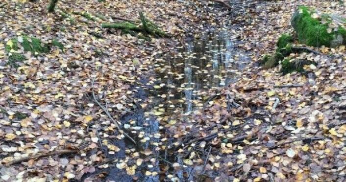 Nedsenkninger i landskapet er en av nøkkeltiltakene for å unngå oversvømmelser i hager og offentlige anlegg ved store regnskyll. Også naturen løser problemet på denne måten, i form av bekker og pytter. (Foto: Ingrid Merete Ødegård)
