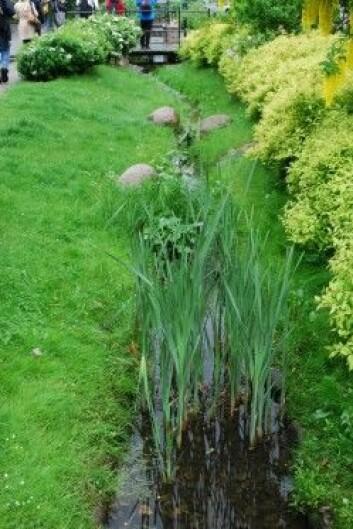 Grønne grøfter kan ta mange former, de kan være kledt med gress eller ulike stauder og kan variere i bredde og dybde etter behov. (Foto: Ingrid Merete Ødegård)