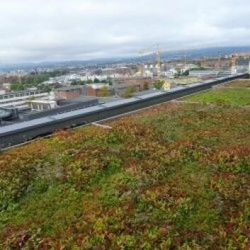 Grønne tak absorberer mye vann og kan bidra til å dempe flomtoppen og belastningen på avløpsnettet i urbane områder. Her fra Helsfyr i Oslo. (Foto: Hans Martin Hanslin)