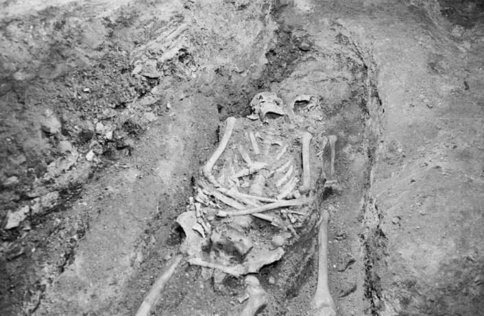 Dette skjelettet ble gravd ut under de arkeologiske undersøkelsene i 1967/68. (Foto: Arkeologisk museum, UiS)
