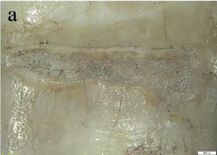 Sporet i tanna. (Bilde: Frayer et al./CC BY NC ND)
