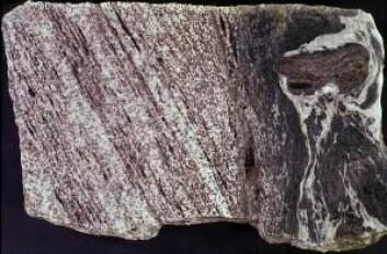 Skjærdeformasjon (myk deformasjon) i en tidligere jordskjelvsone hvor det har oppstått en sprekk. Vannholdige væsker har kommet til og omdannet bergartene, slik at de er blitt svakere og mykere. (Foto: Institutt for geofag / UiO)