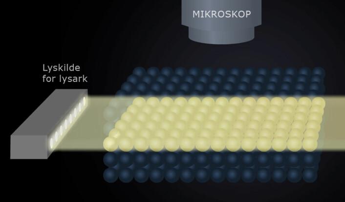 Lysarkmikroskopi belyser bare det tynne laget av celler som forskerne vil se på. Dermed kommer det ikke så mye forstyrrende lys fra cellene i lagene over. Cellene er behandlet slik at de er fluoriscerende – lyser opp når de treffes av lysarket. (Figur: Arnfinn Christensen, forskning.no)