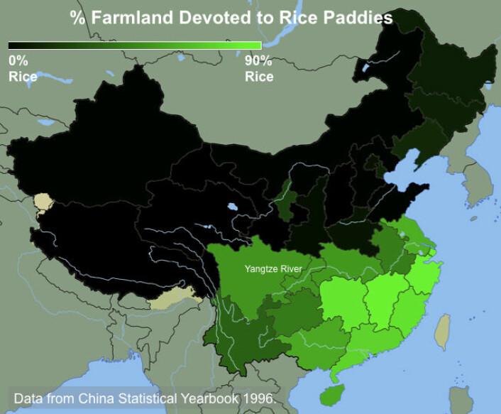 Kartet viser prosentandelen av dyrket mark i Kina som er viet ris. Jo mer intens grønnfarge, desto mer avhengig er de av ris. (Kart: Thomas Talhelm)
